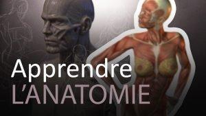 vign_apprendre_anatomie